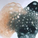 Tapyba muilo burbulais